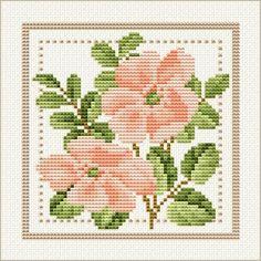 June - Wild Rose, Project 2010 - Flower of the Month, designed by Ellen Maurer-Stroh, from EMS Cross Stitch Design. Cross Stitching, Cross Stitch Embroidery, Embroidery Patterns, Hand Embroidery, Cross Stitch Designs, Cross Stitch Patterns, Josi, Free Cross Stitch Charts, Cross Stitch Flowers
