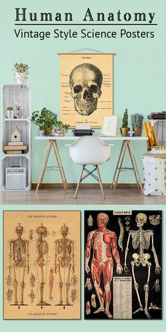 Medical poster art 48 Ideas for 2019 Vintage French Posters, Vintage Circus Posters, Vintage Artwork, Sailor Illustration, Medical Posters, Study Room Design, Medical Office Design, Bedroom Posters, Vintage Laundry