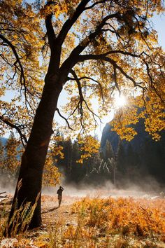 o by Chris  Burkard on 500px...........Fall colors.Yosemite National Park, USA