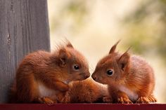 Squirrels by Ketil Valle - Photo 142719881 / 500px