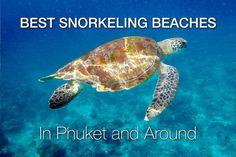 10 Best Snorkeling Beaches in Phuket and Around :https://www.phuket101.net/best-snorkeling-phuket/