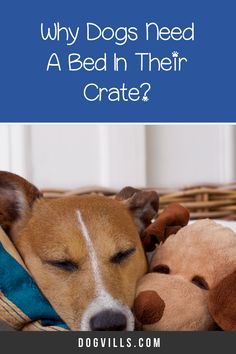 "Are you wondering ""does my dog need a bed in his crate?    ""You might if you've just started crate training your dog and don't know what to put in your puppy's crate.    Fortunately, I've got all the answers you need on how to make your dog's crate more comfortable. Best Puppies, Best Dogs, Dogs And Puppies, Sleeping Too Much, Sleeping Dogs, Crate Training, Dog Training Tips, Cute Dog Collars, Emergency Vet"