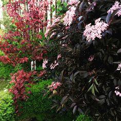Prachtige struik in eigen tuin.