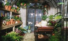 When a miniature setting is good it looks real. THIS IS Miniature@ Inside English greenhouse #miniatures, dollhouse