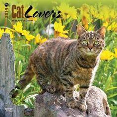 Chat Web, Cat Calendar, Cats, Animals, Gatos, Animales, Animaux, Animal, Cat