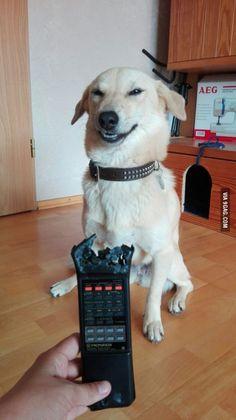 Evil laugh dog being evil
