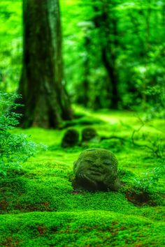 三千院わらべ地蔵 Sanzen-in Temple #Kyoto #Green #緑