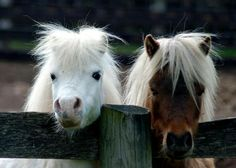 12 best images about Cute Mini Horse Photos on Pinterest ...
