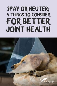 It's time to spay or neuter your new puppy. Here are 5 things to consider when deciding when and if you should proceed. Dog Health Tips, New Puppy, 5 Things, Good Advice, Puppies, Cubs, Lifehacks, Pup, Newborn Puppies