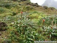 Végétation de la Soufrière