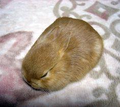 compact rabbit