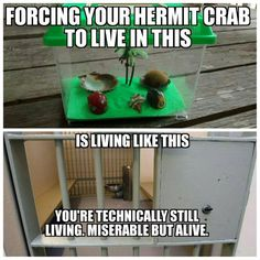 Let's look at how to set up a proper hermit crab habitat, which we refer to as a crabitat. Basing your tank set up on what you saw at the petstore or mall cart… Hermit Crab Cage, Hermit Crab Homes, Hermit Crab Habitat, Hermit Crabs, Reptile Room, Diy Tank, Hamster, Amphibians, Reptiles