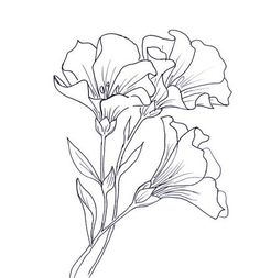 Easy Flower Drawings, Flower Art Drawing, Pencil Drawings Of Flowers, Botanical Line Drawing, Flower Sketches, Floral Drawing, Plant Drawing, Art Drawings Sketches, Flower Sketch Pencil