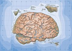Your Brain on Maps  This is what your brain looks like after looking at too much cartography.
