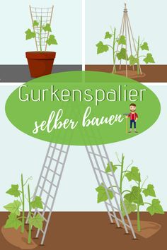 7 Build cucumber trellis yourself Love Garden, Garden Care, Lawn And Garden, Garden Paths, Garden Trellis, Garden Planters, Herbs Garden, Cucumber Trellis, Plants Are Friends
