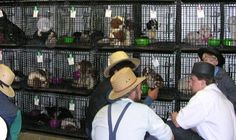 puppy mills   Penny's Tuppence (2 cents in Brit): Dog Auctions. Hereditary Defects ...