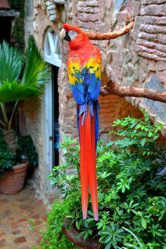 Beautiful Puerto Rican parrot.
