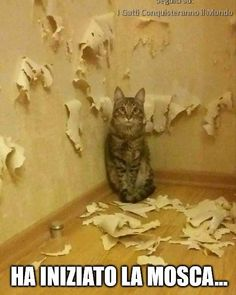 Get your laugh on to these 24 VERY Funny Pictures Of The Day! I Love Cats, Cute Cats, Funny Cats, Animals And Pets, Funny Animals, Cute Animals, Funny Animal Videos, Funny Animal Pictures, Very Funny Pictures