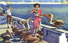 Florida Memory - Feeding the pelicans at recreation pier - St. Petersburg, Florida