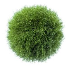 grass sphere  so cool - I'd like to know exactly how it was done.