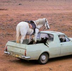 1968 Holden HK Standard Ute. Working hard in outback Australia