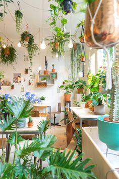 Con el papel #BANANELLA sería como estar rodeada de plantas. Un poco esta misma sensación :)