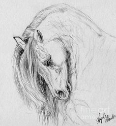 Timeless Beauty Art Print by Angela Marks. All prints are professionally printed, packaged, and shipped within 3 - 4 business days. Choose from multiple sizes and hundreds of frame and mat options. Horse Pencil Drawing, Pencil Drawings Of Animals, Horse Drawings, Art Drawings, Horse Stencil, Horse Sketch, Equine Art, Horse Pictures, Horse Art