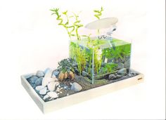 Nano aquarium :)