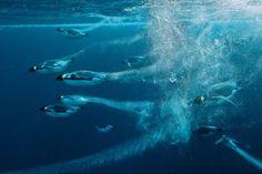 Esta foto forma parte de la fotogalería de las mejores imágenes de este año de National Geographic.