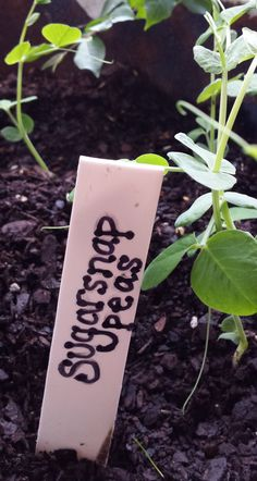 How to make labels for your plants for free or really cheap, using things you likely already have around the house. These will get you organized! Backyard Farming, Chickens Backyard, Fruit Garden, Edible Garden, Rose Bush Care, Garden Plant Markers, Organic Gardening Tips, Vegetable Gardening, How To Make Labels