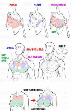 Exceptional Drawing The Human Figure Ideas. Staggering Drawing The Human Figure Ideas.