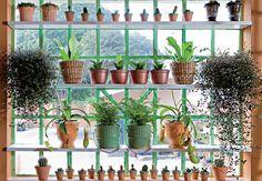Como decorar com plantas.