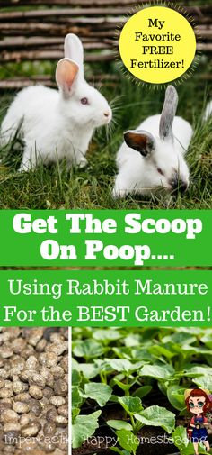 My Favorite FREE All Natural Fertilizer for the Garden. Get the Scoop on Poop - using rabbit manure for Your BEST Garden Ever!