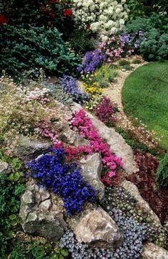 Горечавка, одно из самых популярных растений для альпийских горок