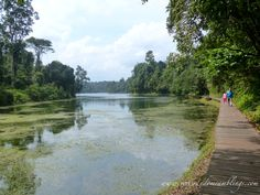 Chemperai Walking Trail MacRitchie Reservoir Singapore