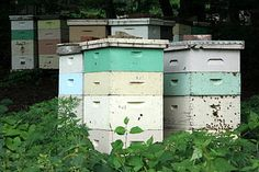 Types of Honey Bee Hive Designs - Save our planet, help #honeybees by keeping a hive at home
