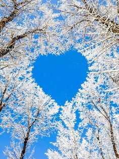 Winter heart through the trees. - from We Heart It