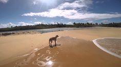 DOGS LIFE IN BEACH TRANCOSO, BAHIA, BRAZIL
