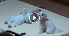 ABaby Started toCry. Just Look atHow His Dog Reacts!