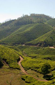 Audio-Slideshow von den Teeplantagen in Munnar. Beeindruckende Landschaft! (Blogpost)