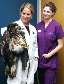 Newtown Veterinary Specialists Helping to Preserve the Ultimate Symbol of Freedom's Freedom