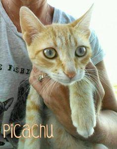 Gato de 4meses en adopción, Picachu. en Alacant - vibbo - 93459880