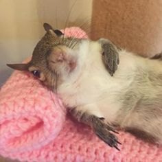 Admit it, you're in love. Community Post: Meet Jill, The Most Adorable… Cute Baby Animals, Animals And Pets, Funny Animals, Wild Animals, Squirrel Girl, Cute Squirrel, Squirrel Pictures, Animal Pictures, Eastern Gray Squirrel