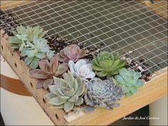 Como fazer um Quadro Vivo ou Jardim Vertical de Suculentas