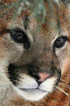 Beautiful bog cat