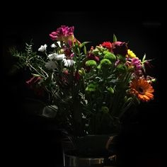 Untitled Instagram Posts, Plants, Flora, Plant