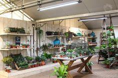 Divine Flor Atilde Copy Al Burford Garden Com - Fairy Lights Terrace Plant Table, Garden Table, Garden Center Displays, Garden Centre, Burford Garden Company, Growing Herbs Indoors, Shop Fittings, Garden Shop, Fairy Lights