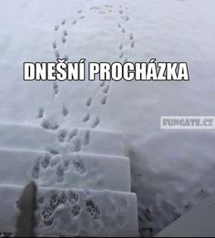 winter walk with a dog Funny Images, Funny Photos, Jokes Quotes, Memes, English Jokes, Cringe, Funny Texts, True Stories, Haha