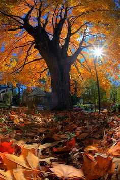 ~~Beautiful Fall