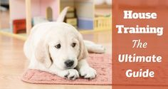 House training your puppy is without doubt one of the most basic and essential bits of living a ...